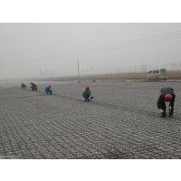 http://himg.china.cn/1/5_175_1073081_525_394.jpg