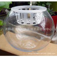 批发绿萝水培玻璃花瓶 透明圆球花盆器,送定制篮