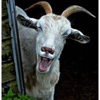 做全价料用羊配合饲料 饲料厂用羊配合饲料 大型养殖场用羊配合饲料
