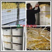 中科大型豆芽机多少钱一台,豆芽机设备,厂家直销