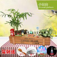 创意苔藓微景观植物组合盆栽办公室桌面室内花卉迷你绿植物盆景