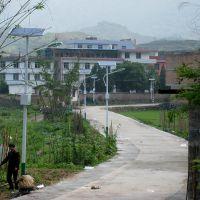 新农村建设8米50瓦太阳能路灯多少钱