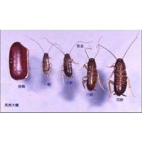 江西,南昌,宜春,九江,蟑螂药批发,零售