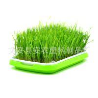 供应芽菜盘 芽苗菜种植盘 育苗盘小麦草种植盘双层育苗盘芽苗菜