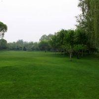 绿植幼儿园人工草皮假草坪网 户外跑道人造草皮地毯 北京人造草坪厂家