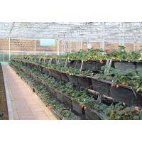 玻璃温室无土栽培蔬菜种植比普通蔬菜种植的产量高吗