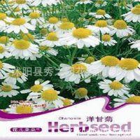 彩包多种菊花野花组合种子洋甘菊种子泡茶喝 量大批发 (50粒)