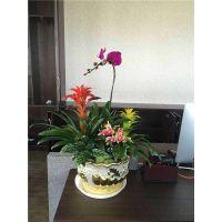 北京花卉销售