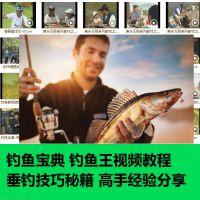 钓鱼技巧视频垂钓实战钓技教程新手入门到熟练技巧基本功学习全套
