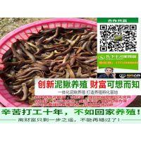 新闻报道泥鳅苗多少钱一斤哪里有卖泥鳅苗的