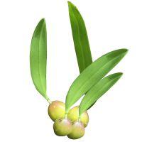 迷你多肉植物盆栽家居办公室绿植花卉石豆兰花铁皮石斛苗水培植物