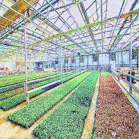 智能玻璃大棚 自动化温室玻璃大棚 生态餐厅玻璃连栋低价清仓