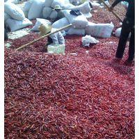 河南辣椒市场欢迎您