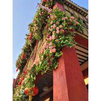 仿真生态植物墙繁花植物花墙立体植物墙方特花墙玫瑰花墙