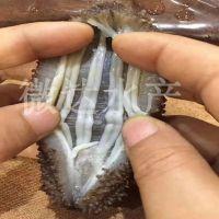 现货供应大连纯淡海参礼盒 微达野生海参 一件代发