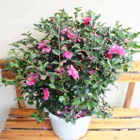武汉绿植服务绿植租售绿植出租,武汉花卉养护植物租赁植物出租