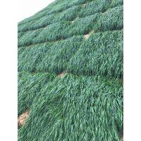 贵阳哪里有卖高速边坡绿化常用的草种草籽