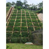 批发徐州房地产建设绿化常用的草种