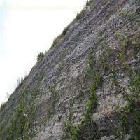 加盟边坡防护网 植被护坡绿化网 防体滑坡钛克网厂
