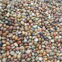 驻马店天然鹅卵石出售/变压器鹅卵石/水处理鹅卵石供应价格