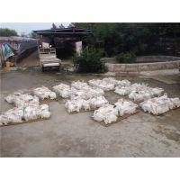 青岛兔子养殖品牌养殖蓝兔子成本天翎农业发展有限公司