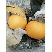 现在种什么梨树苗好 哪个品种的梨好吃 秋月梨苗哪里有卖的