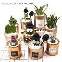ins仙人掌多肉盆栽韩国办公室桌面仙人创意柱爱心绿植创意球盆栽