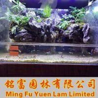 鱼缸造景青龙石 广东鱼缸景观石多少钱一吨? 小青龙石产地批发