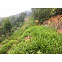 云南玉溪市高速公路护坡种植常用草种有哪些