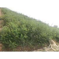 云南玉溪市边坡绿化草籽专卖店