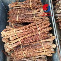 草苁蓉功效怎么样如何食用 不老草产地批发价格多少钱一公斤