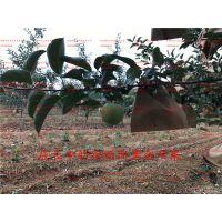 壹棵树农业 红肉苹果树苗 红肉苹果苗基地在哪 厂家销售
