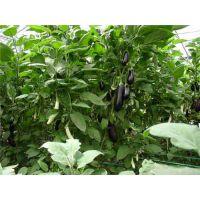 太仓市生鲜配送优质公司 苏州禾子生态食品供应