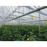 连栋薄膜温室 薄膜蔬菜温室造价成本