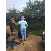 陕西西安市苹果树灌溉用8孔大流量滴头 压力补偿式滴头