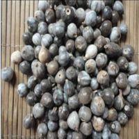 薏仁种子-草珠子-苡仁种子-蔬菜种子-原包装5粒 薏米种子量大按斤