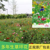 耐寒花种子 矮生野花组合 草坪花 四季开花易种生长迅速花卉植物