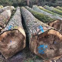 德国金威木业进口欧洲 杨木原木 实木 欧洲木材 可锯切 板材 木材