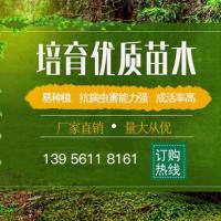 寿县润丰苗木种植有限公司