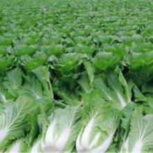 农产品配送-万家欢-农产品配送中心
