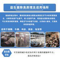 养鸡场鸡容易生病粪便臭味太重怎么预防鸡生病降低粪便臭味去除氨气?