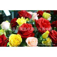 荷兰奥里西亚 蓝色妖姬 彩虹玫瑰七彩玫瑰种子