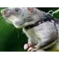 南昌灭蟑螂,灭老鼠,灭蚂蚁,灭害虫-南昌专业杀虫公司