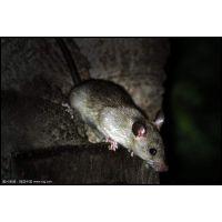 烟台蔚蓝除虫灭鼠公司服务于烟台灭鼠、灭蟑螂、除虫等服务