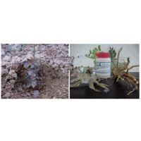 厂家直销法国爱森 果树种植苗木花卉培育土壤抗旱保水剂