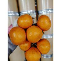 润木新产柑橘粉 柑橘提取物 天然提取 无添加