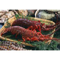 澳洲龙虾进口清关代理公司