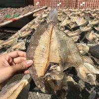 广东海鱼烘干设备专业热泵过载厂家