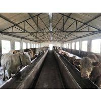 肉牛快速催肥配方 牛育肥饲料配方