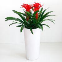 北京花卉销售绿植租赁公司